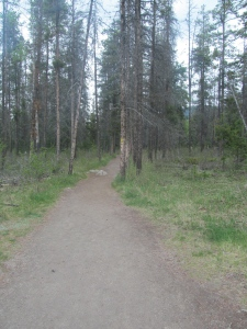 The beginning of the trail