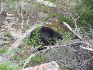 Sleeping beauty in the brush