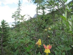 Wildflower 2 YOHO