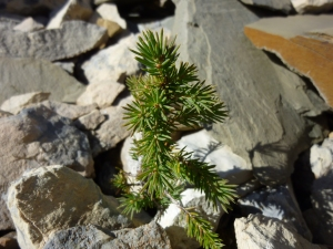 Growing in the harshest environment